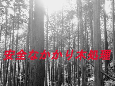 【かかり木処理】プロが教える!安全なかかり木処理の方法